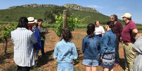 Un viñedo francés en Extremadura
